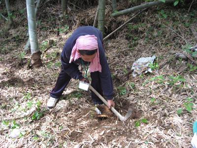タケノコ掘り (6).jpg
