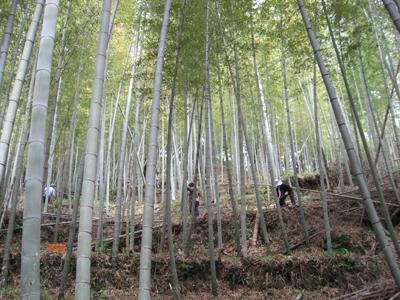 タケノコ掘り (9).jpg